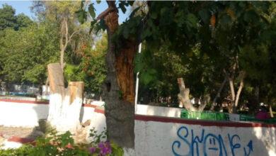 Photo of Han talado árboles del Parque Morelos Gómez Palacio