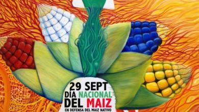 """Photo of En Día Nacional de Maíz, Campaña de """"Sin Maíz no hay País"""" …"""