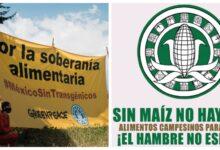 Photo of Greenpeace y Campaña Nacional Sin Maíz no hay País, demandan a AMLO, emisión de Decreto Presidencial contra Transgénicos y el Glifosato…